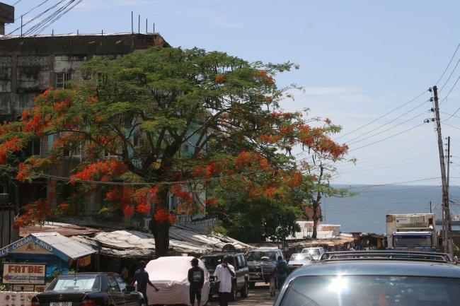 tree_view.jpg