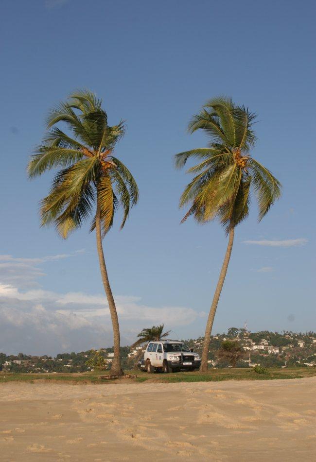 un_jeep_palms.jpg