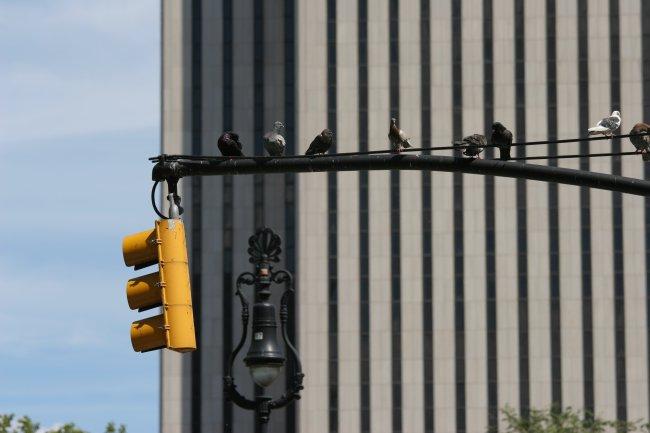 birds_on_a_lamp.jpg