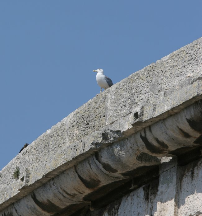 birds_eye_view.jpg