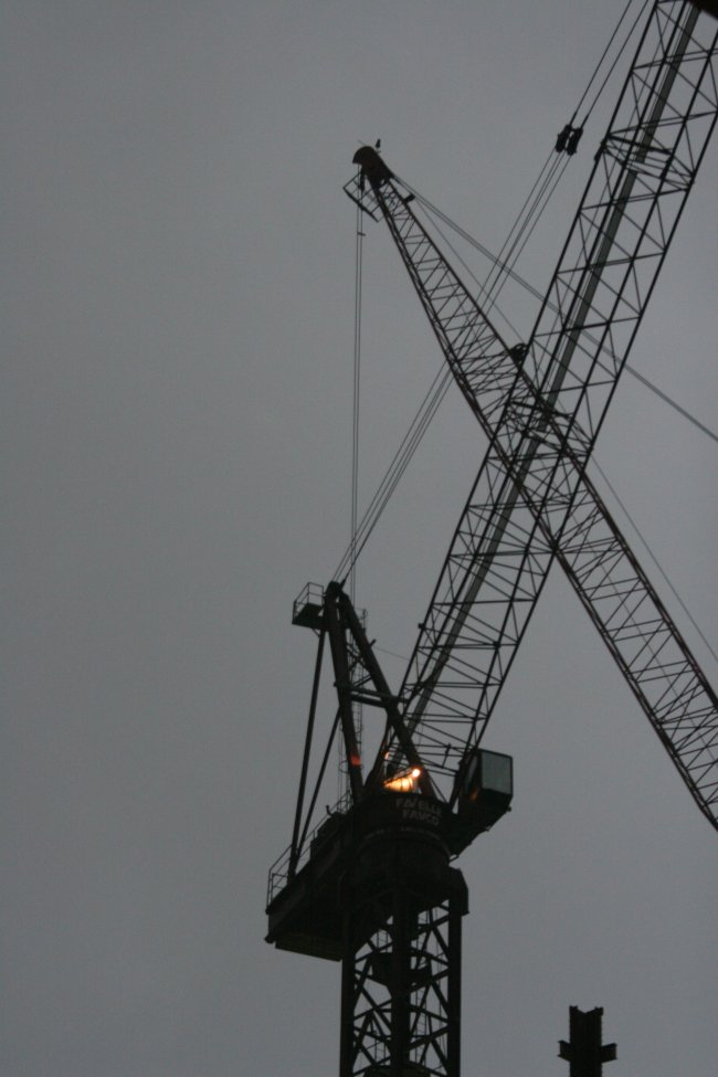 crane_2.jpg