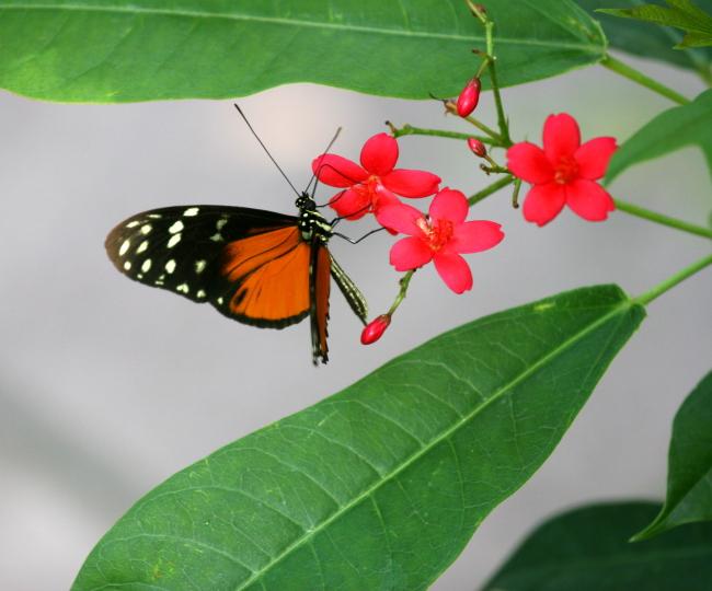 butterfly_7.jpg